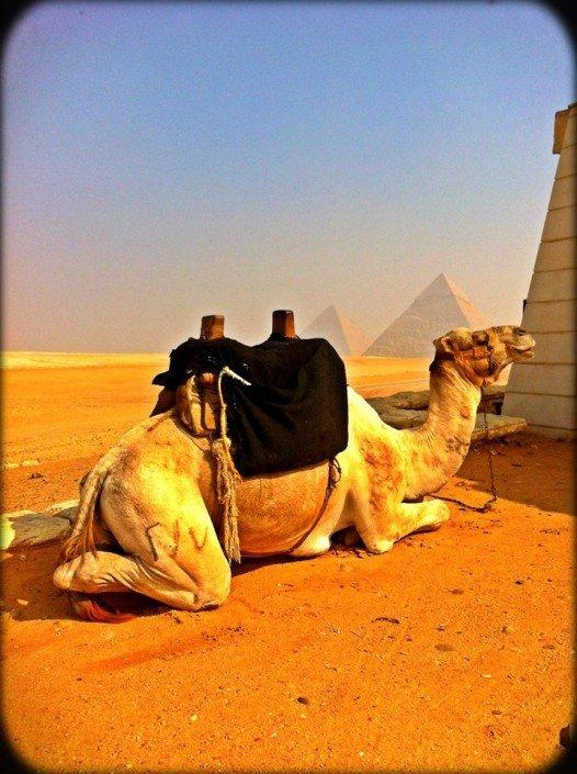 Sisters G Le Caire - Visite des Pyramides avant le Show ! 10